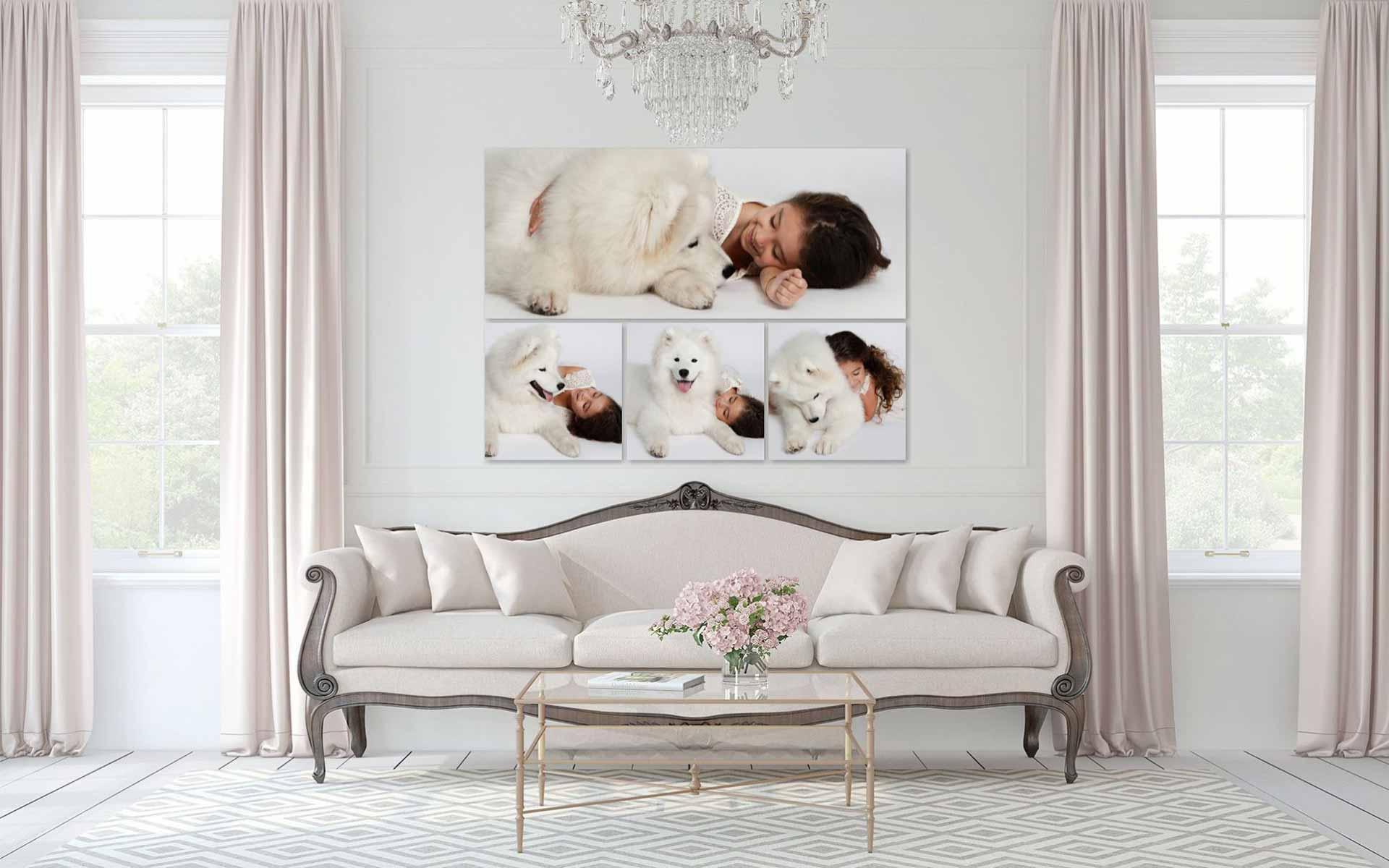 Pets Dog Samoyed Photography